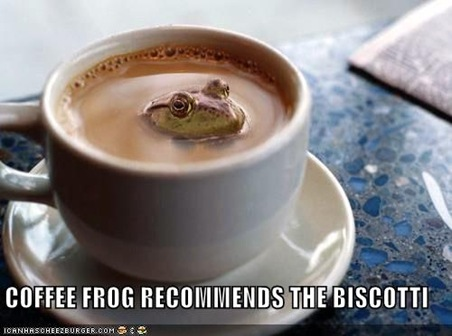 funny-pictures-coffee-frog-biscotti3
