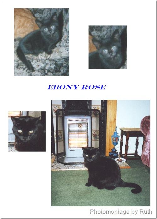 ebony rose a domestic cat