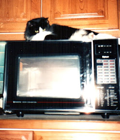 long haired cat on top of a microwave