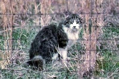 sweet feral cat