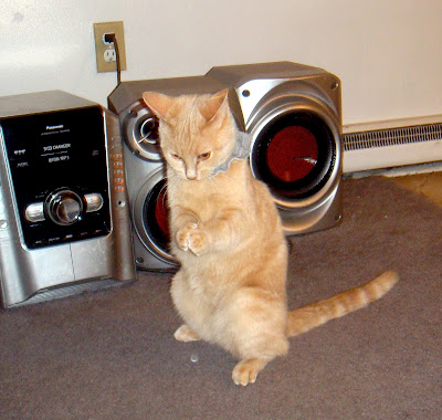 Jynx a much loved moggie cat