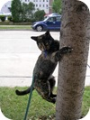 cat climbing