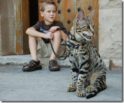 kathrin-stucki-photos-savannah-cat-and-son