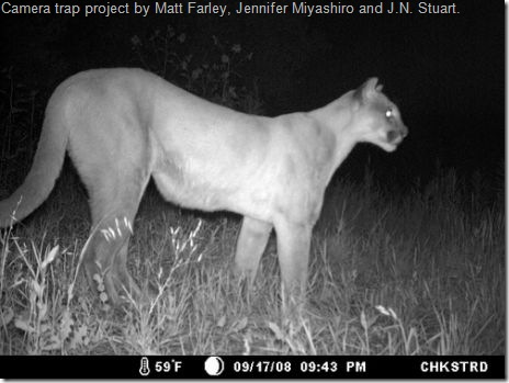 camera trap photo of mountain lion
