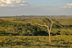 savanna cerrado Brazil