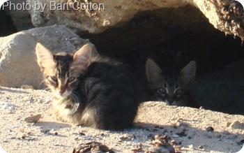 Istanbul wild kittens