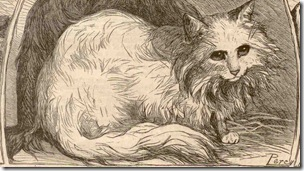 persian cat from the early 1900s