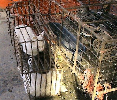 domestic cat in cage in a market in China ready to be slaughtered and eaten