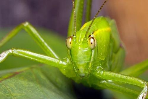 mantis staring