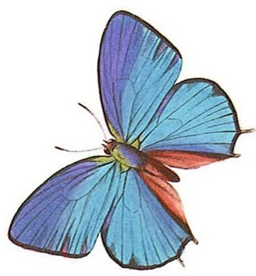 Here are some nice colour butterfly tattoo designs.
