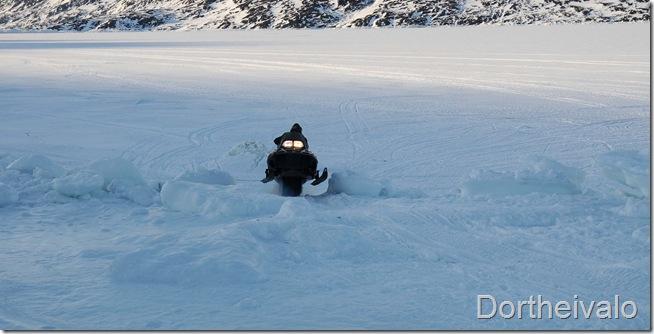 lille-far alias arktisk fartdjævel