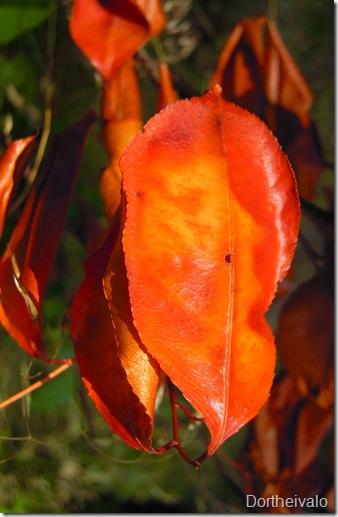 gyldentblad