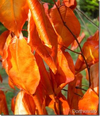 gyldneblade