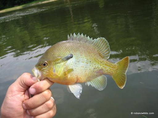 sunfish, reston, va