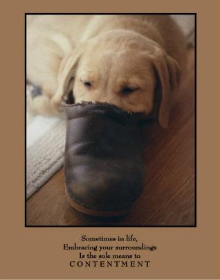 [Contentment-Photographic-Print-C12201928[1].jpg]