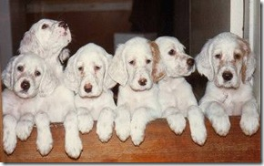 six_puppies02