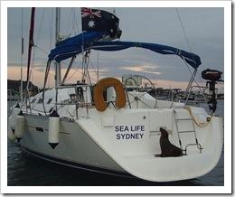 sealife3