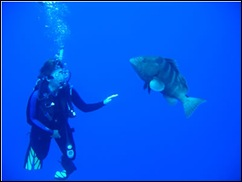 im4SCUBA: get your recreational credentials! Some experiences cannot be had by just snorkeling, such as Melissa making friends with this huge grouper: