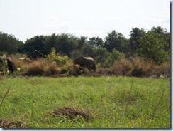 elephant comp