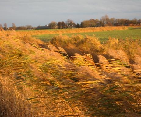 natuur in Groningen