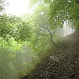 蓑毛→ヤビツの道。霧雨。