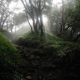 光が射す方向が塔ノ岳頂上。あと少し。最後の体力を振り絞って。。。