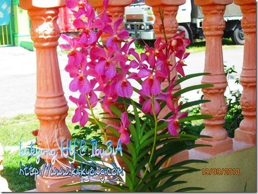 pink-orkid-edit