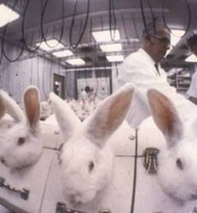 animal testing pictures. Cosmetic Animal Testing