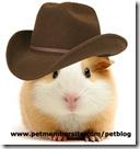 guinea_pig_cowboy1