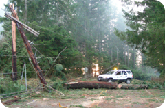 Take Winter By Storm: downed trees