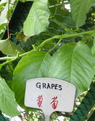 Playful Singapore: Chong Pang Zone 1 Community Garden - part 2 ♥