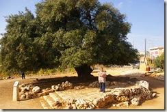Israel 1162010 (66)