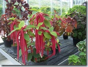 2010.08.13-014 plantes vertes