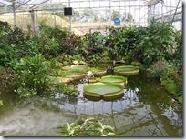 2010.08.13-017 plantes tropicales