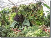 2010.08.13-018 plantes tropicales