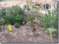 2010.08.13-021 plantes de climat sec