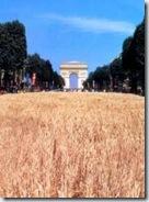 0624 moisson sur les Champs-Elysées