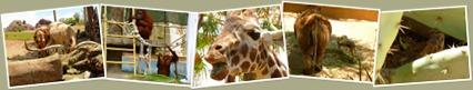 View Phoenix Zoo