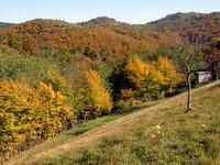 Gozd v jesenskih barvah