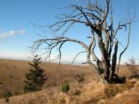 Osamelo drevo pod vrhom