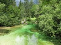 Potok Savica