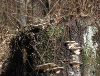 Lesne gobe privabljajo poglede