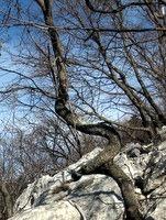 Spirala v gozdu