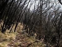 Spust po gozdni poti