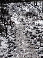 Poledenela pot vrh Nanosa