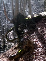 Mreža korenin kljubuje eroziji