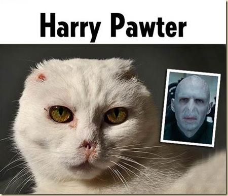 harrypawter