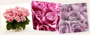 View roses