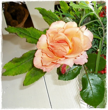 Blek oransje rose