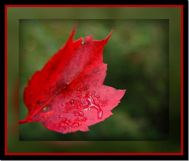 fall9pic